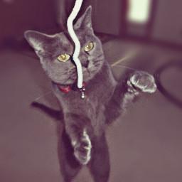 art cat