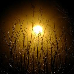 darkandlight darkphotography nature winter