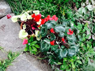 2014 plants flowers path stone