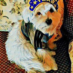 dog newyear newyear2017 magiceffect