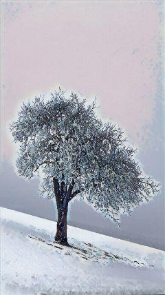winterwonderland winter snow tree coldoutside