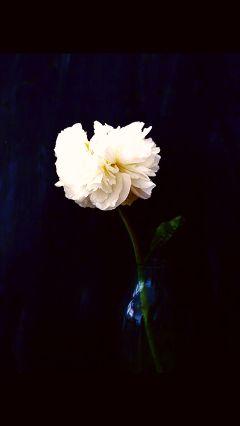 freetoedit flowerchild