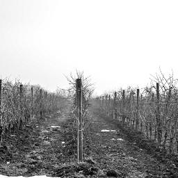 italy nature wine travel landscape freetoedit