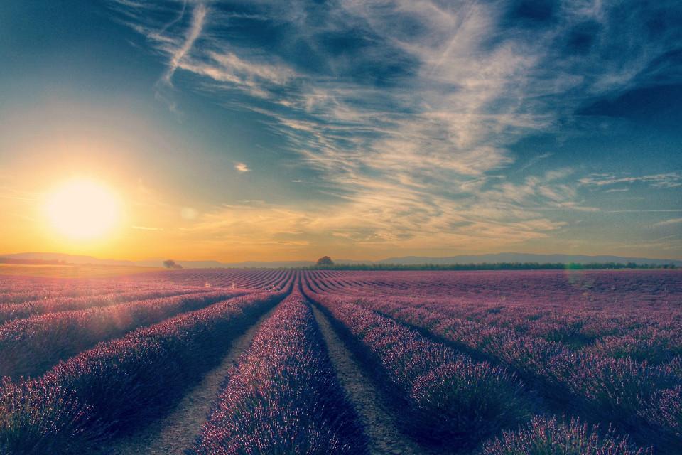 #dpcpurple #pcsunrise #sunrise #pcbeautifulscenery #beautifulscenery #pcpurple #purple