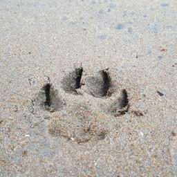 track footprint teo dogs beach freetoedit