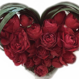 love redrose valantinesday postereffect