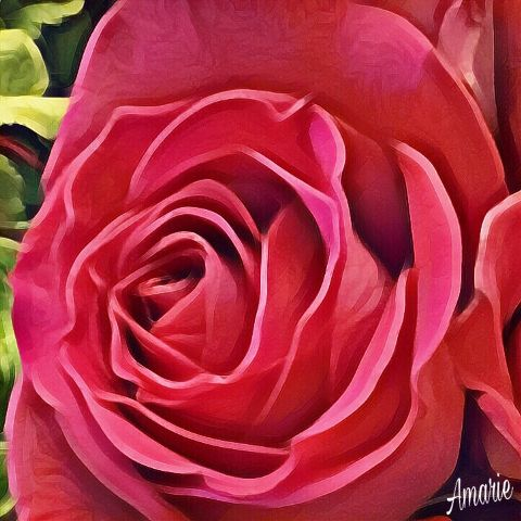pinkrose rose flower hdr artisticeffects