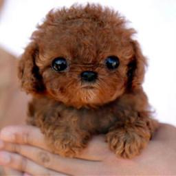 adorable dog baby freetoedit