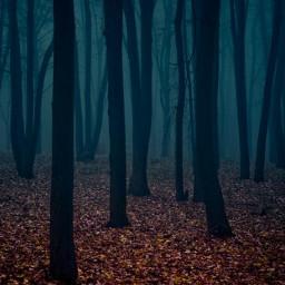 bosque naturaleza freetoedit