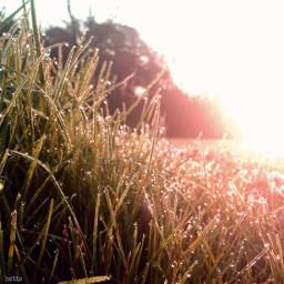 sunrise grass dewdrops lowangle myoriginalphoto