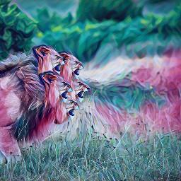 freetoedit interesting lion