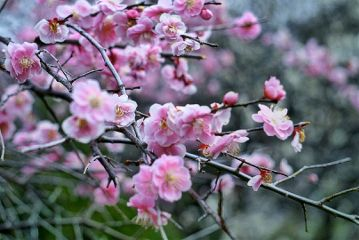 blossom photography freetoedit nature