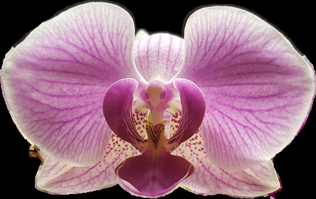 #ftestickers #flower #orchid #flowerstickers