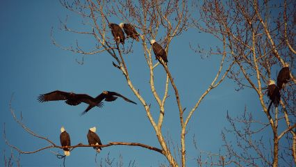 photography wildlife nature