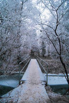 nature winter bridge
