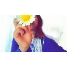 freetoedit flores amarillo