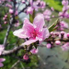 flower nature blossom shanghai