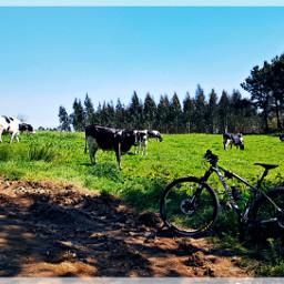 freetoedit btt mtb cycling mountainbike