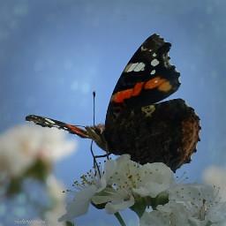 macro#macrofoto#macrophotography farfalla#butterfly fotonature#lovenature#naturelove#nature naturephotography macro