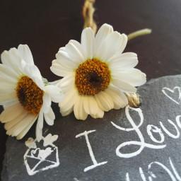 goodeveningfriends freetoedit love truelovealways flowers