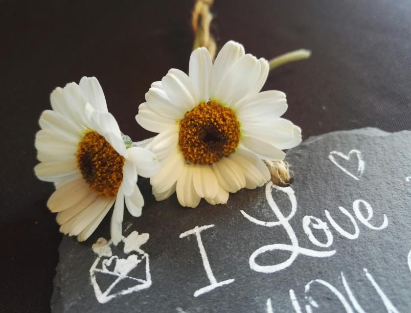 #goodeveningfriends #FreeToEdit #love #truelovealways #flowers